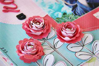A rose - close up
